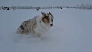 Hund leker i snøen i sakte film
