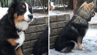 Best friends dogs love barking together