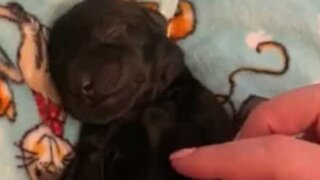Adorable sleepy puppy just melts your heart