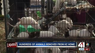 200 rats, other animals removed from home on Wabash Avenue