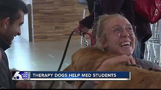 Therapy Dogs at ICOM