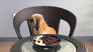 Pet experiment: Woman leaves dog alone with a plate of treats