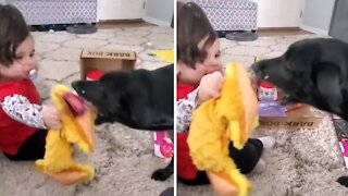 Toddler and doggy share preciously fun moment together
