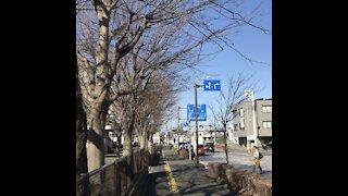 Yokohama Street, Beautyful