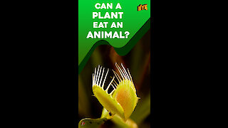 What if plants could eat animals? *