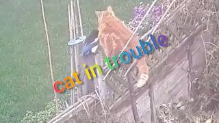 cat in trouble