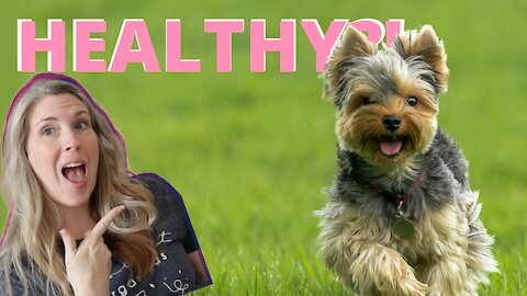 How To Tell If Your Dog Is Healthy & Vital