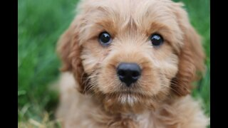Lovely puppy cute puppy funny puppy