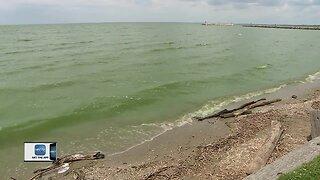 Blue-green algae blooming on Lake Winnebago