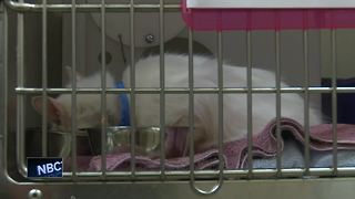 Wisconsin Humane Society rescues dozens of cats from hoarding situation