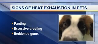 Signs of heat exhaustion in pets