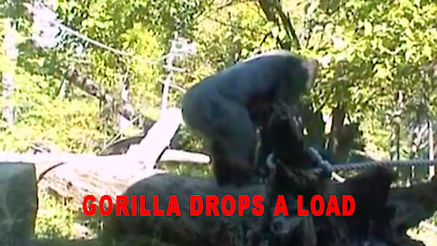 Gorilla Drops A Load.
