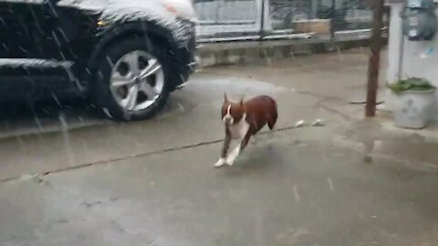 Dog ecstatic after waking up to a yard full of snow