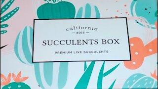 Succulents Box Plants