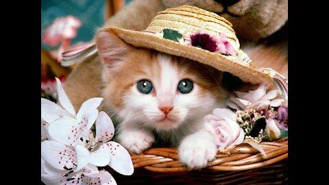 cat beautifull