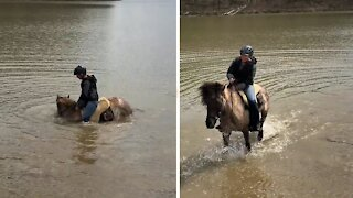 Horse decides to sit in lake during horseback riding session