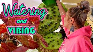 Houseplant Watering Tips & Tricks