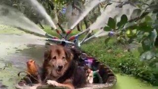 Smart dog watering garden plants
