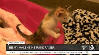 Midlands Humane Society holding fundraiser