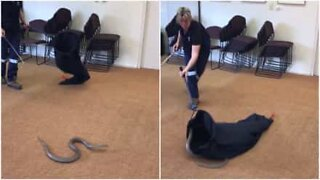 Woman demonstrates how to catch a snake