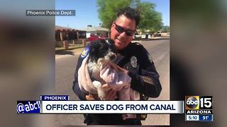 Phoenix police officer saves dog from canal