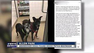 Abandoned dogs found inside Petco bathroom in Allen Park