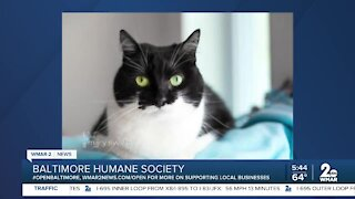 Baltimore Humane Society is open and waiting for you!