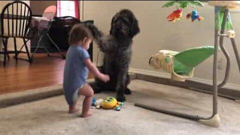 Hund lærer liten jente å sitte