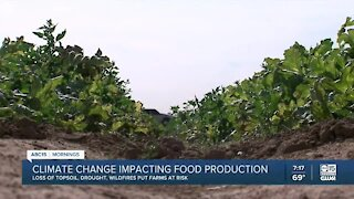 Climate change impacting food production