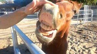 Horse loves to be petted