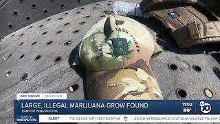 Large, illegal marijuana grow found