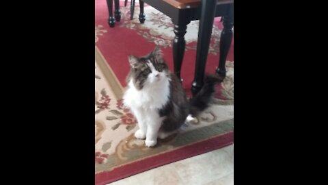 Our Super Senior Cat: Holly