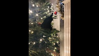 Cats addicted to playing in Christmas tree
