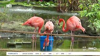 Everglades Wonder Gardens reopens at limited capacity in Bonita Springs