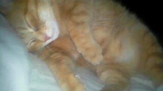 Sleepy Kitty Snores Away