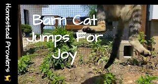 Homestead Cat ~ Otis ~ Jumps For Joy