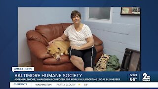 Mia the dog is up for adoption at the Baltimore Humane Society