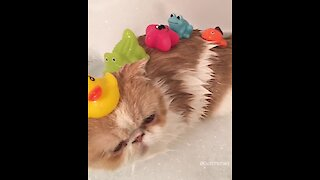Cute cat enjoys bath with his favorite toys