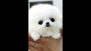 adorable puppy videos