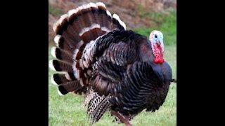 Thanksgiving trucker stories
