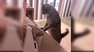 Hilarious and Cute Cats