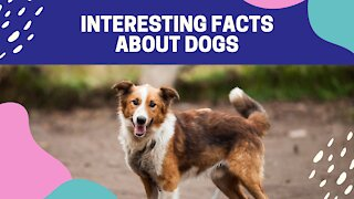 Some INTERESTING FACTS about DOGS that you might not know