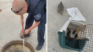 Police officers rescue trapped ducklings
