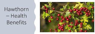 Hawthorn - Health Benefits