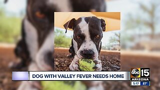 Dog with Valley Fever needs a home