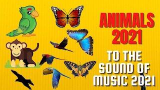 parrot 2021 butterflies 2021 monkeys 2021