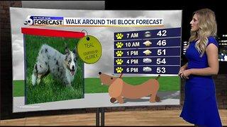 Dog Walking Forecast Teal