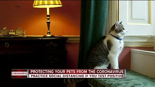 Warning for pet owners after 2 cats test positive for COVID-19