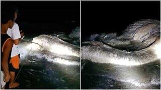 Una misteriosa carcassa è stata trovata sulle coste delle Filippine