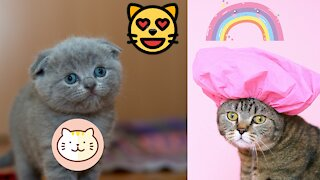 Funny cats compilation #1 cute cats speaking like humans